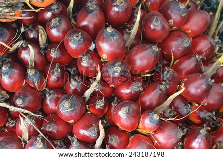 palm seed background - stock photo