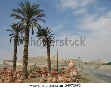 palm tree and ceramics by the road in Israil