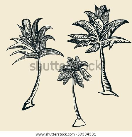 3 palm trees illustration - stock photo