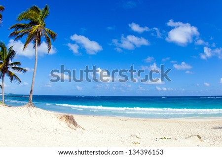 palm trees on tropical beach
