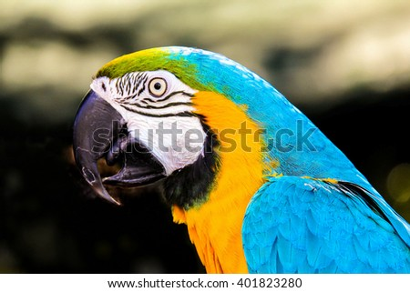 Parrot macaws ( Ara ararauna) on grunge background - stock photo
