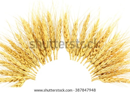 patterns of ears oats barley rye or wheat