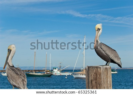 2 pelicans sitting on pier with boats in background - stock photo