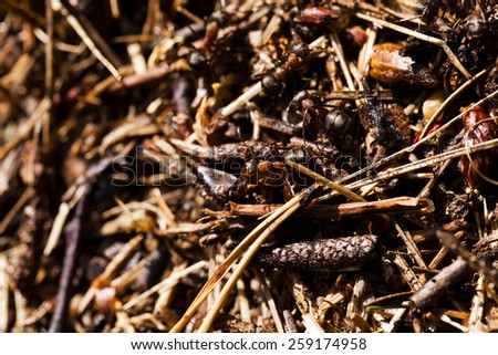 photographed by a close up an ant hill with the ants who are on it.  - stock photo