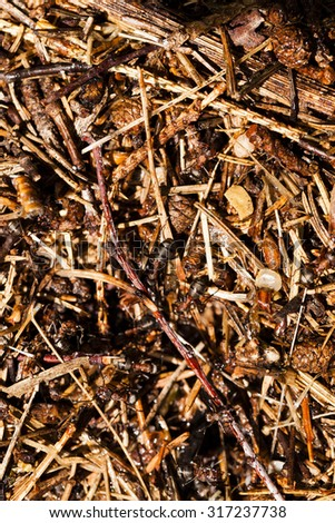 photographed by a close up an ant hill with the ants who are on it. small depth of sharpness - stock photo