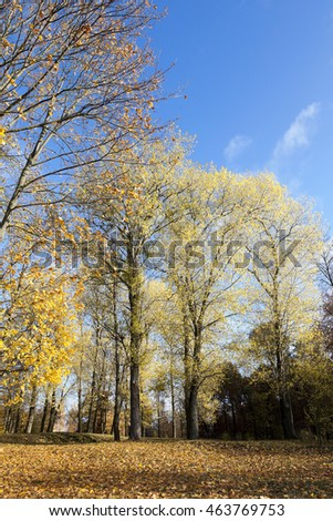 photographed close-up of yellowed and fell to the ground leaves of the trees, the sky,