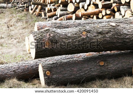 photographed close-up timber during timber harvesting