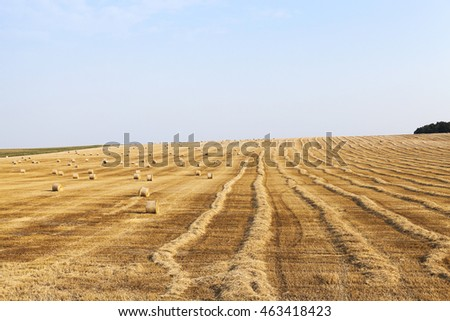 photographed field, which collects the wheat harvest, blue sky, straw haystacks