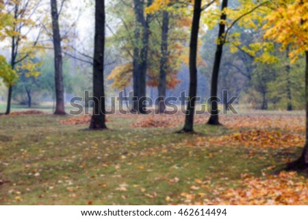 photographed trees and foliage in the autumn park, defocus