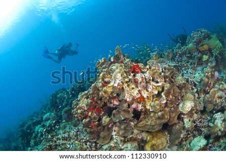 Photographer taking pictures on a St Lucia reef - stock photo