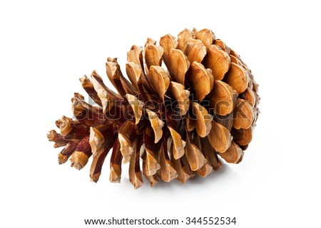 Pine cone isolated on white background - stock photo