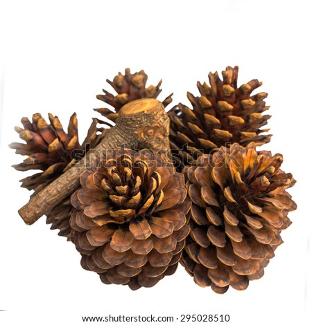 5 pine cones isolated on white background