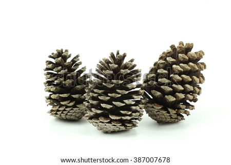 pine fir cone with seed isolated on white background - stock photo