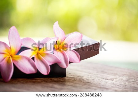 Pink Frangipani Plumeria flower, close up  - stock photo