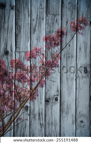 """pink tecoma"" Mural. The wood painting  concept - stock photo"