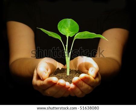 plant between hands on black - stock photo