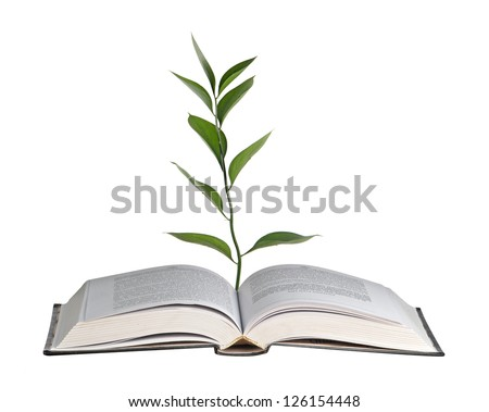 Plant growing from open book - stock photo