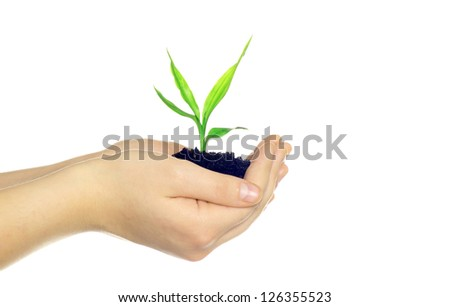 plant in hands isolated on white