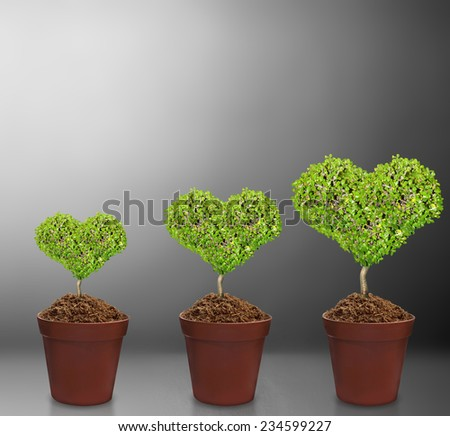 plant in pot Isolated over gray