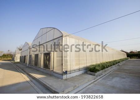 plant nursery - stock photo