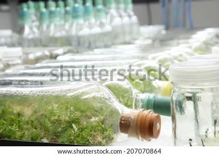 Plant tissue culture - stock photo