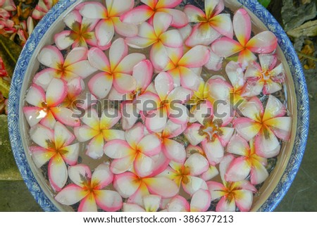 """plumeria"" flowers in Cup water"