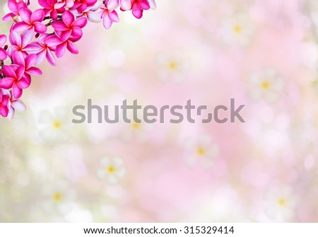 Plumeria flowers  natural background - stock photo