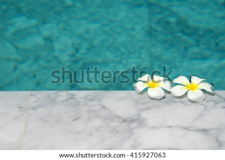 Plumeria in pool
