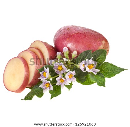 potatoes with green leaves and inflorescence isolated on white - stock photo