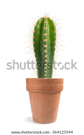 Potted  cactus isolated on white background  - stock photo