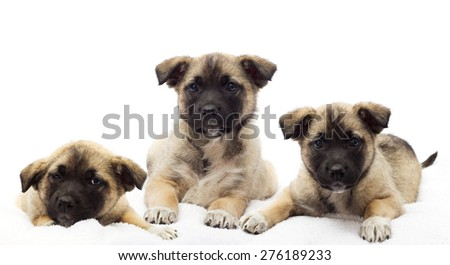 puppies looking