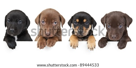 4  puppies showing their paws  above white banner