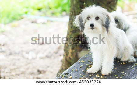 Puppy Dog on the park. - stock photo