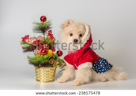 Puppy meets New Year in studio in a neutral backround - stock photo