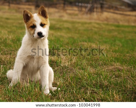 puppy, 2 months old, sitting in front of green background - stock photo