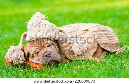 puppy with funny hat sleeping on the grass - stock photo
