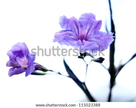 Purple flowers in close up - stock photo