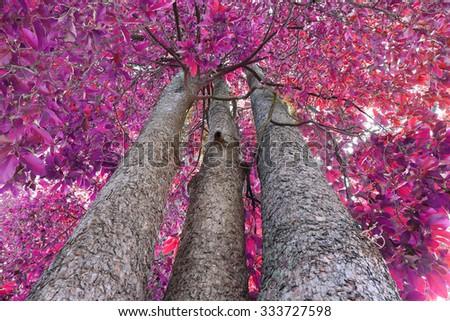 purple leave tree - stock photo