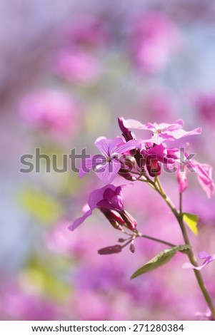 Purple wildflowers-springtime - stock photo
