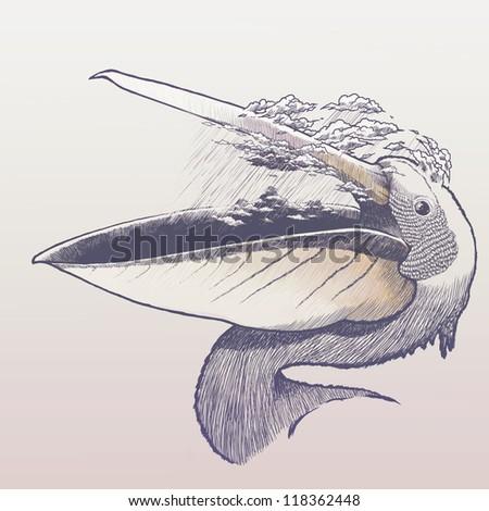Rainy pelican - stock photo
