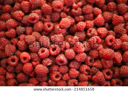 Raspberry fruit background. Group of sweet red rasberries close up - stock photo