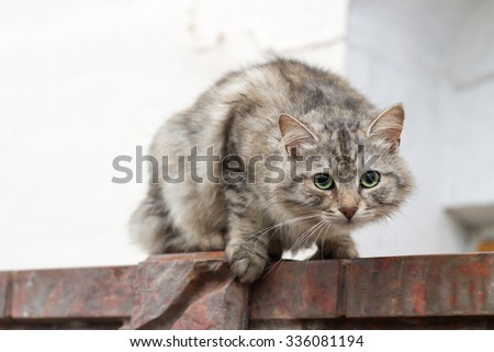 Ready to Run.  Bent, Compressed at blurred background. - stock photo