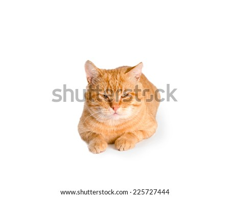 red cat  isolated - stock photo
