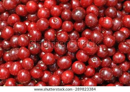 red ripe cherries. Harvesting. Ripe berries are beneficial. Food. Gifts of Nature  - stock photo