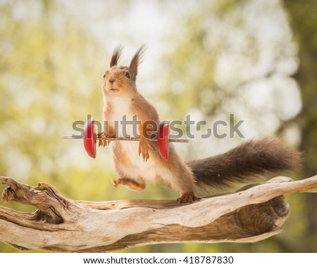red squirrel standing on tree trunk with weight object and moving blurry leg - stock photo