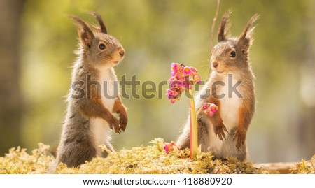 red squirrels standing on moss with lila flowers l - stock photo