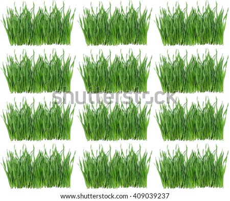 repeat pattern summertime fresh juicy green grass on a white background