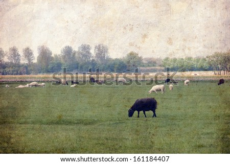 Retro style image of rural landscape, sheep in the meadow