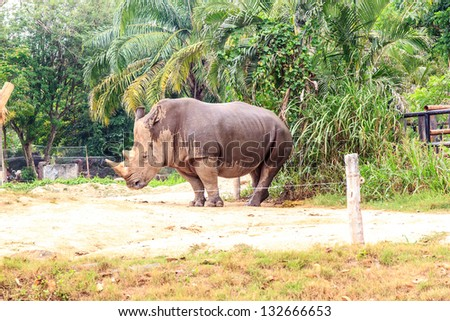 rhino or  Chordata it stay in zoo .