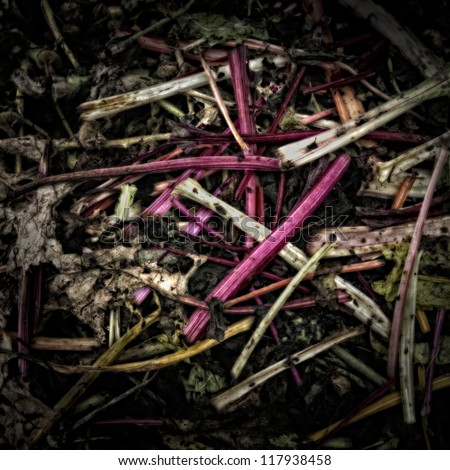 Rhubarb Stems on a Compost Heap/Artistically alienated to create a grungy somber atmosphere - stock photo
